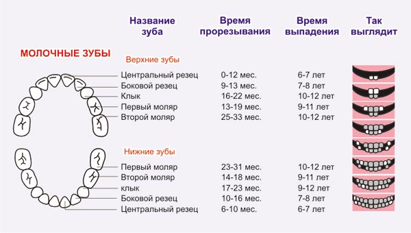Схема прорізування зубів у немовлят